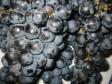 schiacciata con l'uva